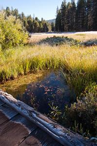 yosemite-pond-meadow