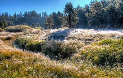 frosty-yosemite-meadow-2