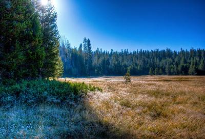 yosemite-meadow-2