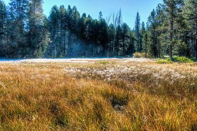 frosty-yosemite-meadow-4