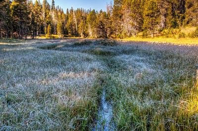 McGurk Meadow