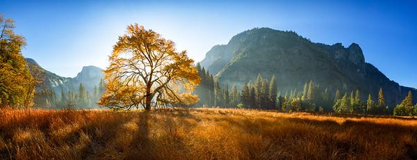 Autumn Morning - Yosemite