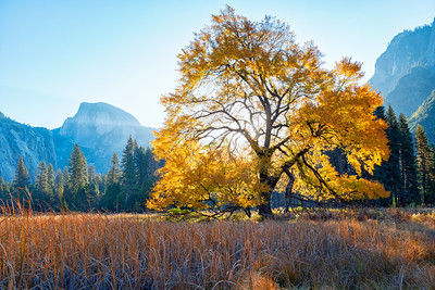 Cook's Meadow - Yosemite-3