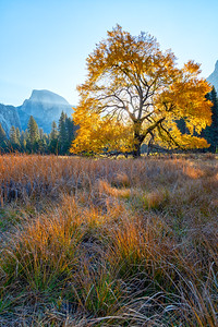 Cook's Meadow - Yosemite