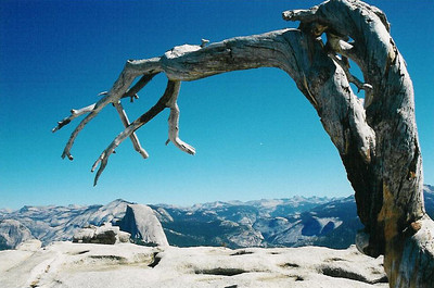 Half Dome Within Reach