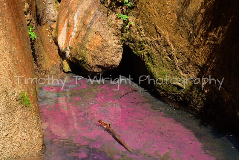 This pink pool was quite a surprise in the Narrows.  Hidden from hikers this pool is a stark contrast from the vigin river and the tower canyon walls.