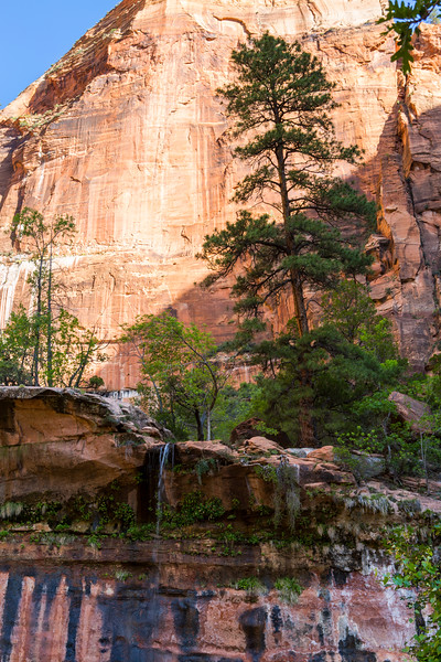 On the Emerald Pools Trail