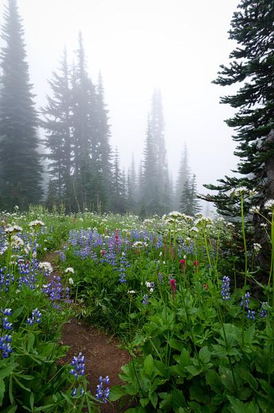 Quiet Trail<br /> Mt. Rainier National Park