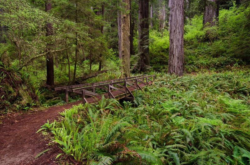 Bridge Through the Redwoods