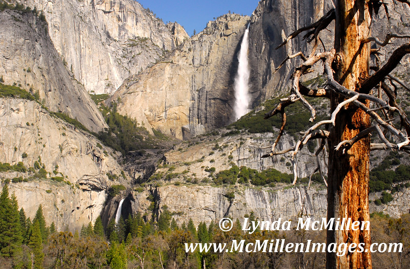 Upper & Lower Yosemite Falls California.  The dead tree in the foreground has now fallen and is slowly decomposing into the valley meadow.