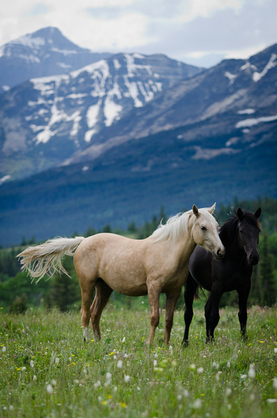 Friends on the mountain-side<br /> Glacier National Park