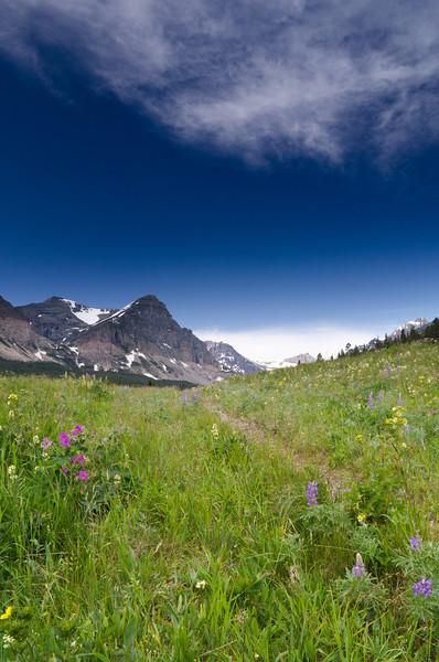 Summer Trail<br /> Glacier National Park, Montana