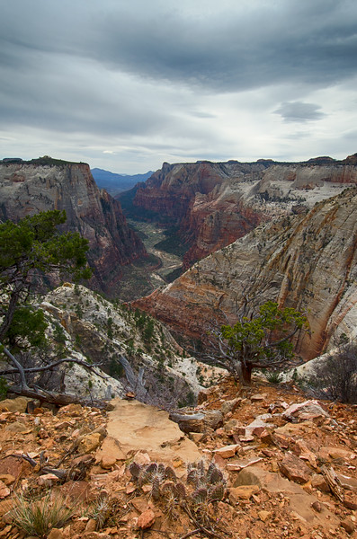 Observation Point Trail