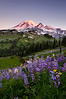 Mt. Rainier sunrise