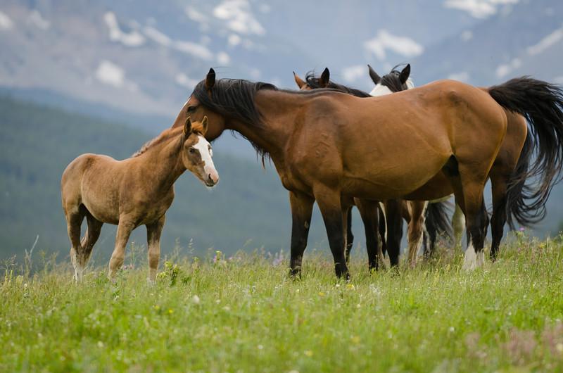 Family Time<br /> Glacier National Park