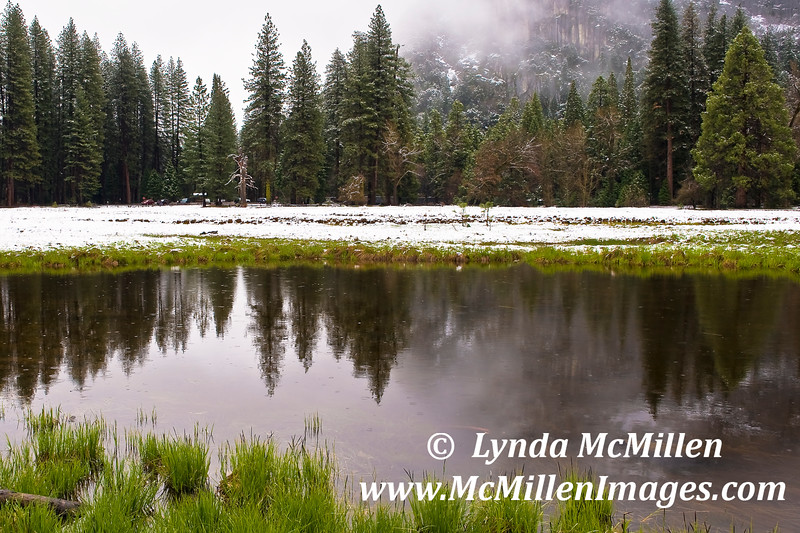 Forest Reflections:  Sierra Mountains, Yosemite NP California