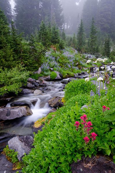 Paradise River Morning<br /> Mt. Rainier National Park