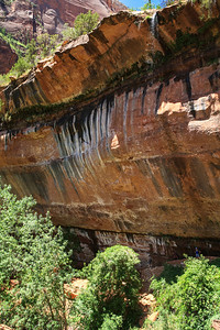 At Lower Emeral Pool, Zion National Park
