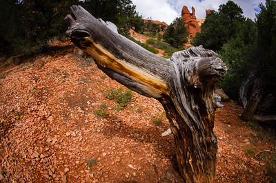 Bryce Canyon National Park in Utah.