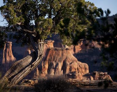 Colorado National Monument in Grand Junction, Colorado.