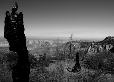 Grand Canyon North Rim - Roosevelt Point Trail.