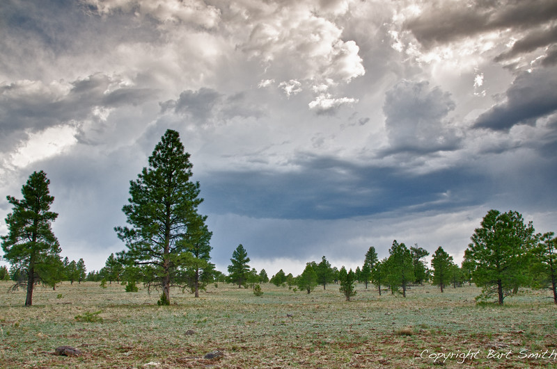 Sparse Ponderosa forest along the Arizona Trail