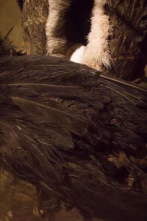 Amuletdrengen Tertaq. 80 armuletter er fæstnet på denne inderpels, som i 1923 blev båret af en seks-syv år gammel dreng hos Netsilik-folket i Canada. Han var den mest beskyttede og kraftfyldte person i hele stammen. Dragten blev erhvervet på 5. Thule ekspedition af Knud Rasmussen.