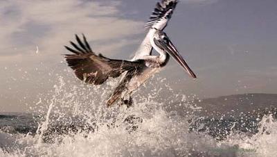 Native Birds
