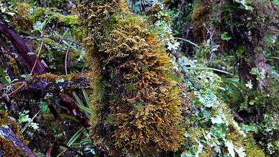 Whakapapa Moss Forest