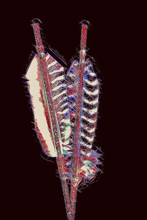 Dual Arrow Feathers