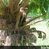 Genus: Pritchardia<br /> Species: hillebrandii<br /> Setting: Landscape<br /> Location (Island): Oahu<br /> Location: Waimea Waimea Valley Audubon Center<br /> Subject Composition: Trunk<br /> NPH Photo Assignment:<br /> Creation Date: 2007.02.08<br /> Photo Courtesy of: David Eickhoff<br /> Copyright Retained by: David Eickhoff