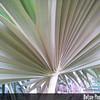 Genus: Pritchardia<br /> Species: minor<br /> Setting: Natural Habitat<br /> Location (Island): Kauai<br /> Location: Kalalau Rim<br /> Subject Composition: Leaf<br /> Creation Date: 2008.09.14<br /> Photo Courtesy of: Michael DeMotta<br /> Copyright Retained by: Michael DeMotta<br /> Notes: Underside of a leaf.