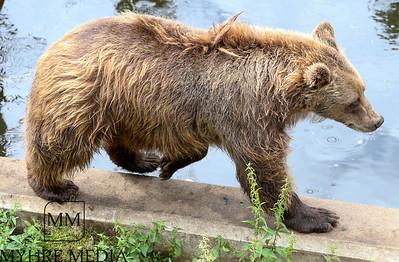 Bjørneparken2018-03