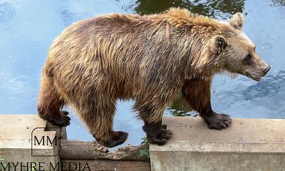 Bjørneparken2018-06