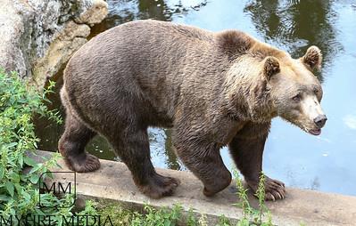 Bjørneparken2018-05