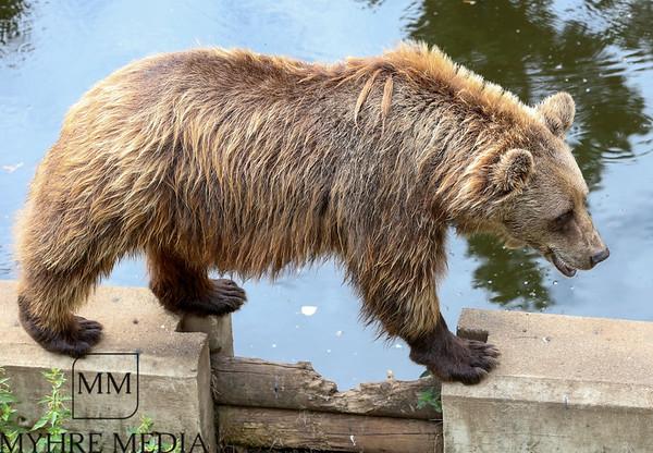 Bjørneparken2018-08