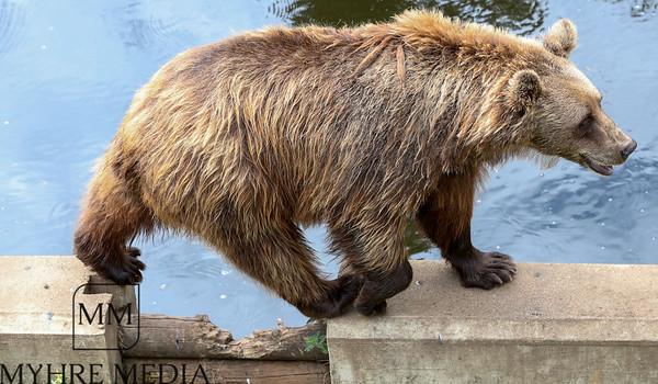 Bjørneparken2018-07