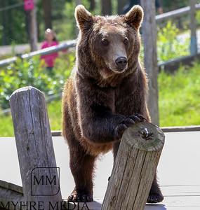 Bjørneparken2017-46