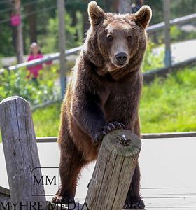Bjørneparken2017-45