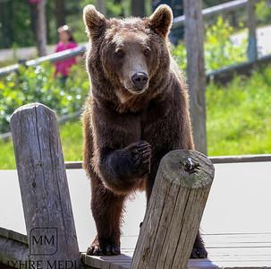 Bjørneparken2017-47