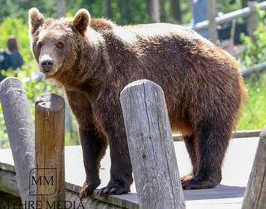 Bjørneparken2017-48