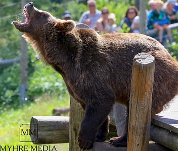 Bjørneparken2017-42
