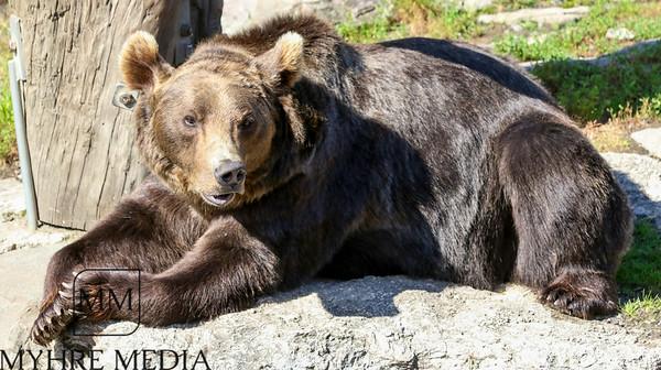 Bjørneparken2017-53
