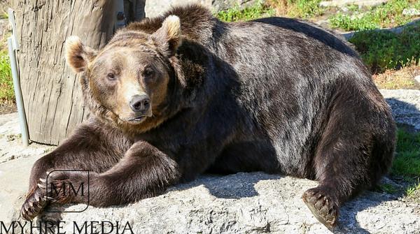 Bjørneparken2017-54