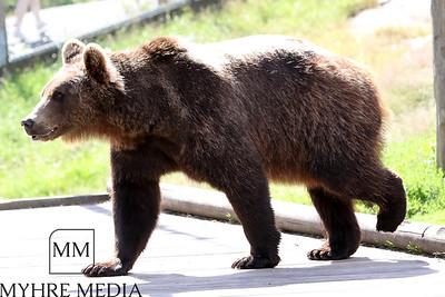 Bjørneparken2017-49