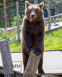 Bjørneparken2017-44