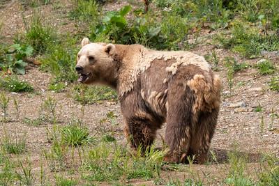 Alle Bären haben eine schreckliche Vergangenheit als Tanzbären aus Osteuropa oder sie stammen aus tierquälerischer Haltung in Kleinzoos.