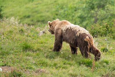 Die Anlage bietet Platz für fünf Bären. Drei davon sind bereits eingezogen (Stand August 2019).