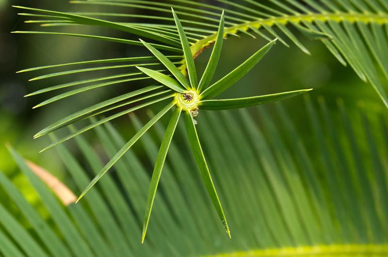 Spiraling palm