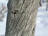 Trær, grønt, blader, stammer, nåletrær